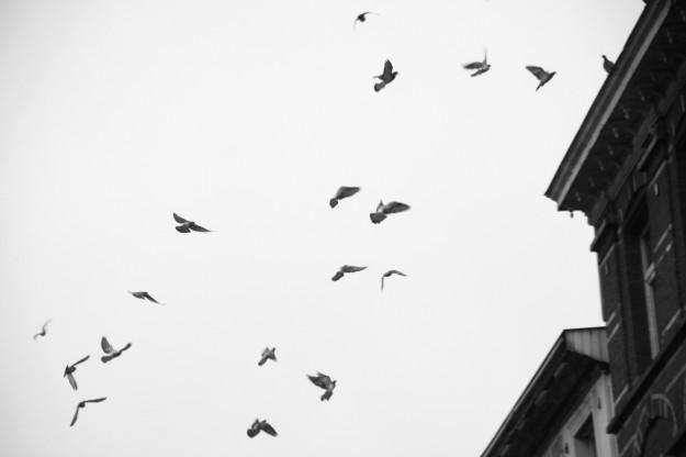 fåglar3