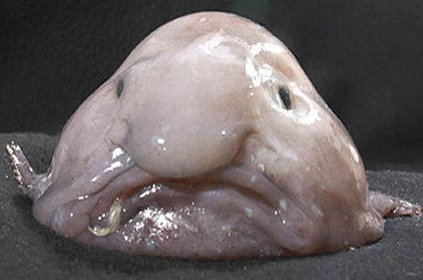 dödfisk